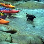 Paddeling pups looking for lost boaters - photo by Mercer O.