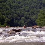 Nolichucky at 650cfs 2009-08-08 035